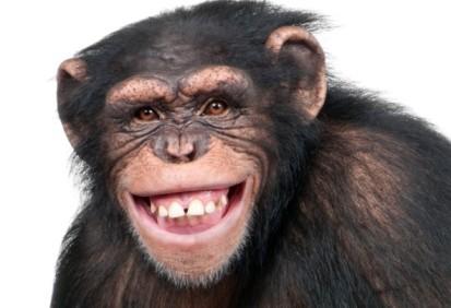 Sonrisa_primate