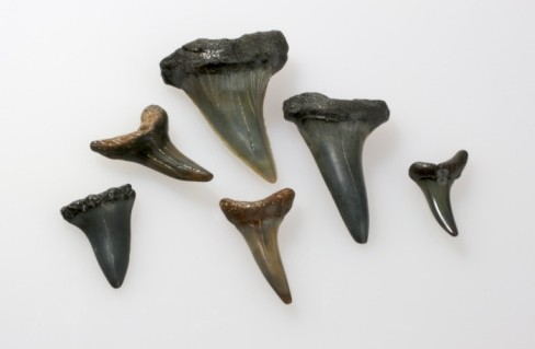 BocasVitis Implantes Dentales Historia