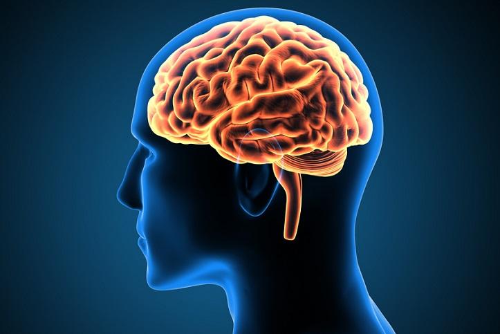 Evolucion-cerebro